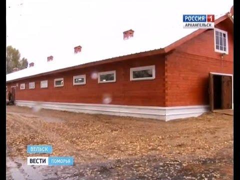 В Архангельской области на Хорошевском коневодческом комплексе открыли новую ферму
