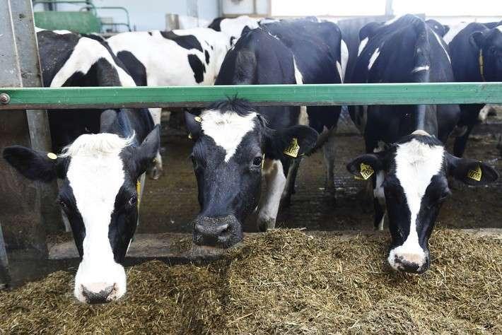 53. Вторая очередь крупного молочного комплекса введена в эксплуатацию в Тюменской области Сделано у нас, политика, факты