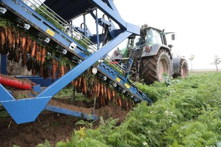7. Калининградская область начала выращивать морковь в промышленных масштабах Сделано у нас, политика, россия, факты