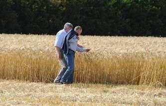 Россия к 2023 году станет третьим по величине экспортёром пшеницы в мире