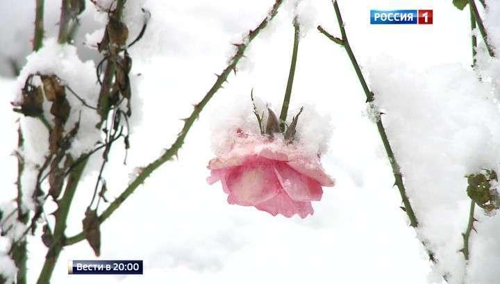 Из осени в зиму: непогода кое-где рвёт провода и выворачивает деревья