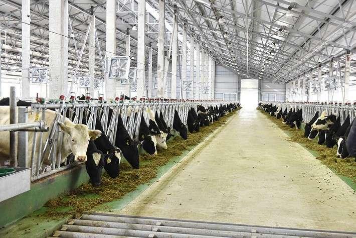 21. В Белгородской области открыта первая очередь молочного комплекса на 2000 коров Сделано у нас, политика, факты
