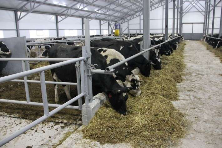 27. В Кемеровской области открыли животноводческий комплекс Сделано у нас, политика, факты