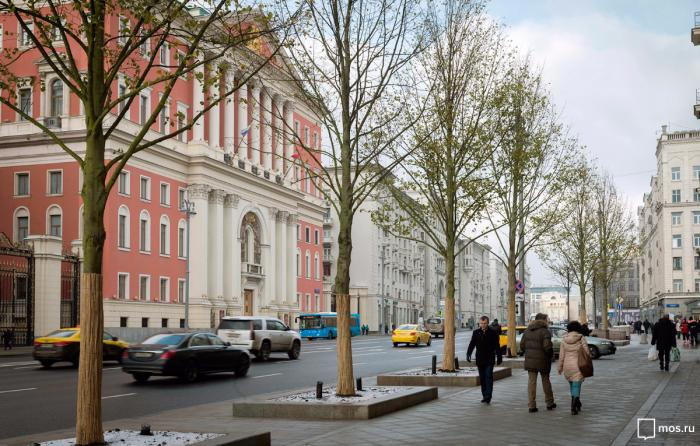 Высадка деревьев на центральных улицах Москвы в рамках программы «Моя улица»