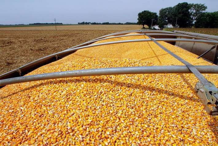 18. Россия начала экспорт кукурузы во Вьетнам Сделано у нас, политика, факты