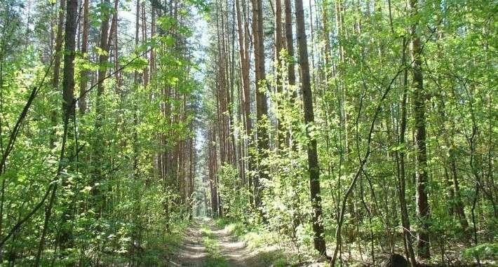 41. В Тамбовской области образованы два новых памятника природы Сделано у нас, политика, факты