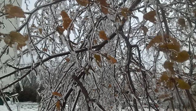 Ледяной дождь застал врасплох жителей Москвы и Подмосковья