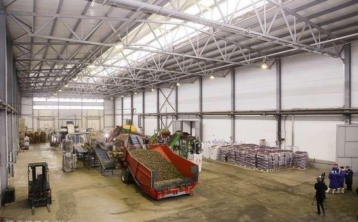 23. Линия по сортировке овощей запущена в Пензенской области Сделано у нас, политика, факты