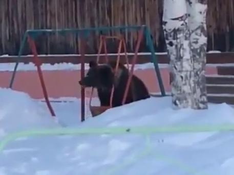 Под Томском сняли медведя, качающегося на детских качелях