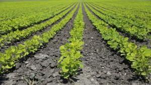 Волгоград продвигает импортозамещающий проект для растениеводства