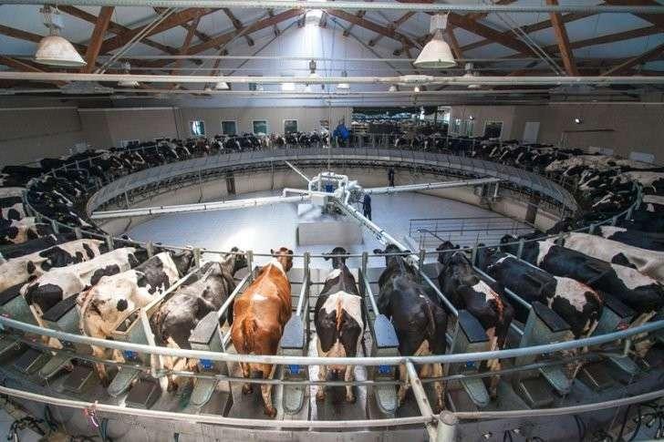 13. Крупнейшая в России молочная ферма заработала в Подмосковье, цель — производить млн. тонн молока. Сделано у нас, политика, факты