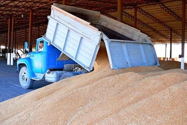 В Крыму урожай зерна в два раза превысил прошлогодний