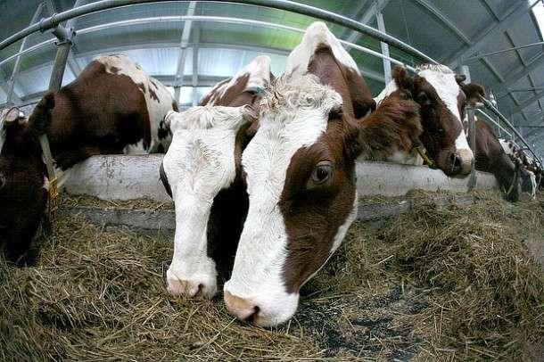 19. Роботизированная молочная ферма введена в эксплуатацию в Коми Сделано у нас, политика, факты