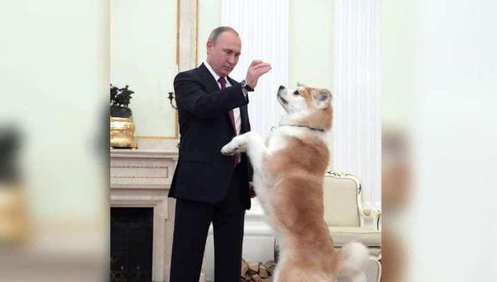 Владимир Путин появился перед журналистами под охраной «строгой собаки» Юмэ