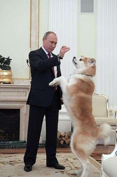 Собаку Юмэ породы акита-ину Владимиру Путину виюле 2012года подарили власти японской префектуры Акита.