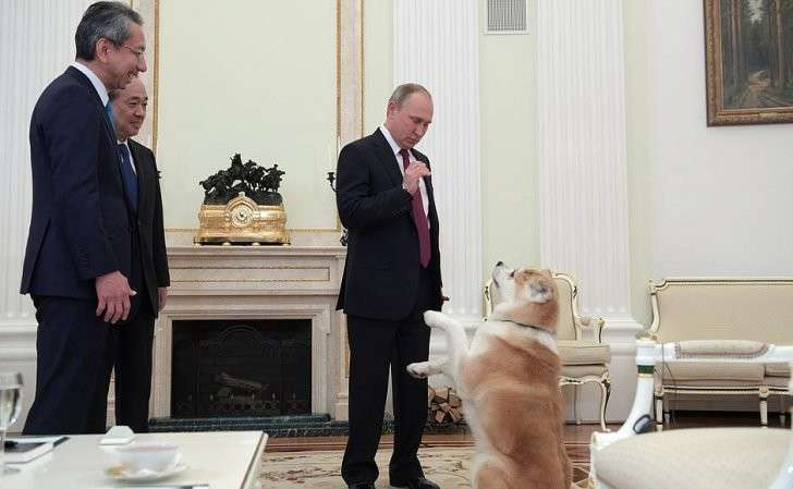 Сисполнительным директором телекомпании «Ниппон» Такаюки Касуя (крайний слева) иглавным редактором газеты «Иомиури» Мидзогути Такэси. Собаку Юмэ породы акита-ину Владимиру Путину виюле 2012года подарили власти японской префектуры Акита.