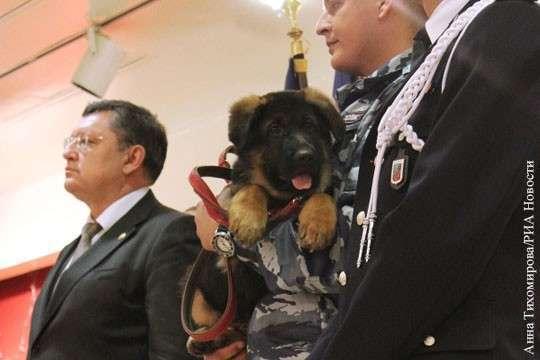 Подаренного Франции российским МВД пса Добрыню признали не годным к службе