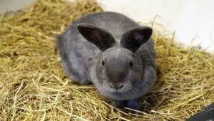 Под Смоленском создают огромную кролиководческую ферму