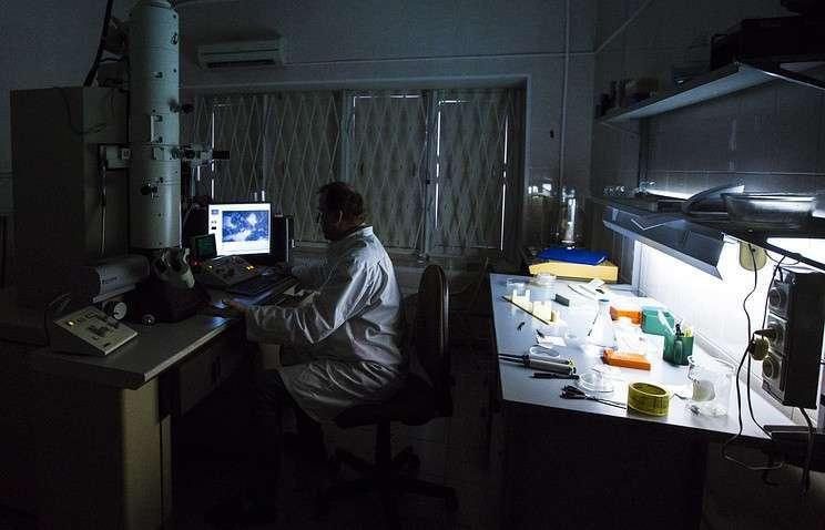 Ученые из Красноярска создали биополимерные пластыри, под которыми раны заживают быстрее