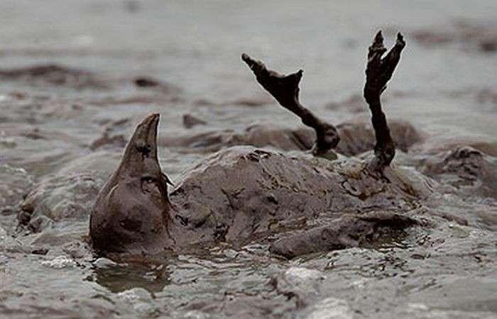 Экологическая проблема: разливы нефти.