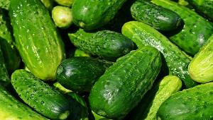 Саратовская область обеспечена огурцами и томатами почти на 200%