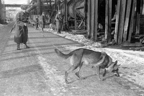 Чем знаменита собака, для которой Иосиф Сталин отдал свою шинель?