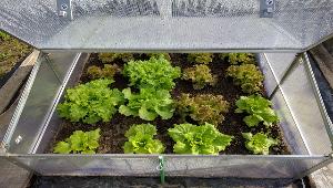 На Ставрополье возводят тепличный комплекс для мини-салатов