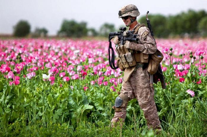 В Афганистане процветает международная наркомафия, под прикрытием США