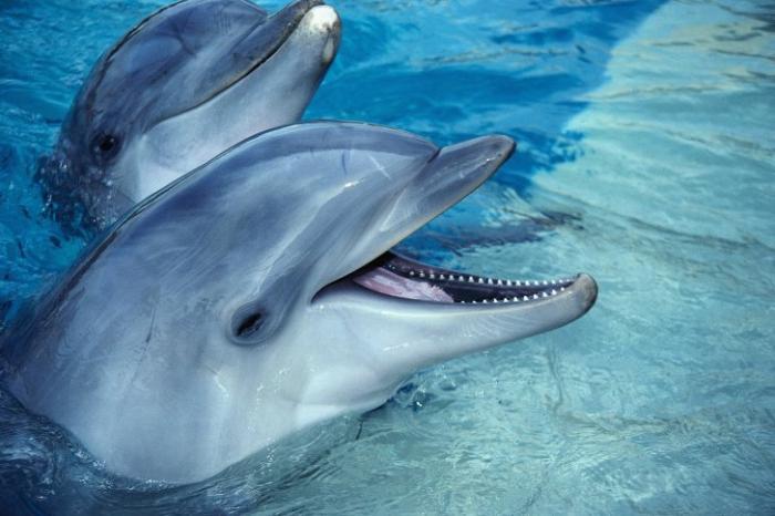 Дельфины в Новой Зеландии выбросились на берег из-за загрязнения моря, Н.Дроздов