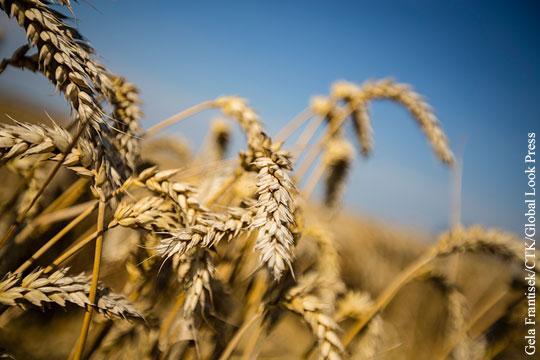 Россия: Качество пшеницы ставит под сомнение качество хлеба