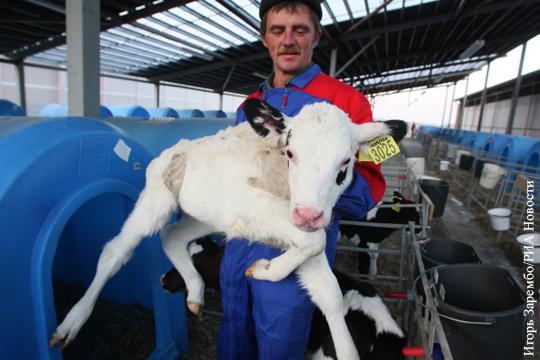Жалобы на крепкий рубль доказывают успешность русских аграриев