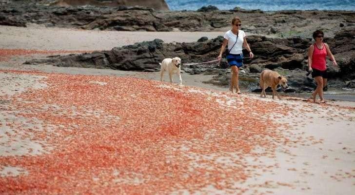 В США проваливается земля, погибают животные, рыба и птицы