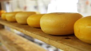 Сырный завод построят в Подмосковье