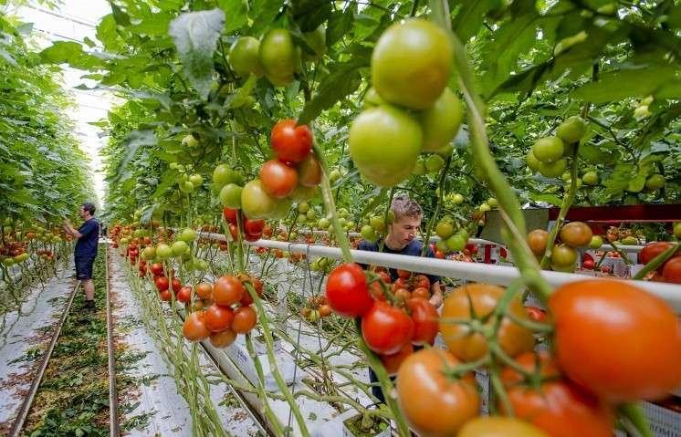 Правительство Украины готовится ввести санкции против компаний с российским капиталом