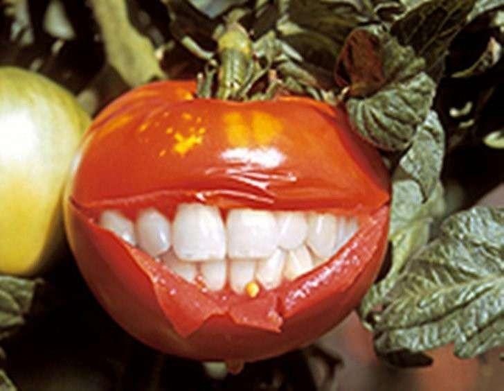 Лоббированием ГМО занялась комиссия аферистов РАН по борьбе с лженаукой