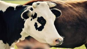 Молокозавод полного цикла запустили в Липецкой области