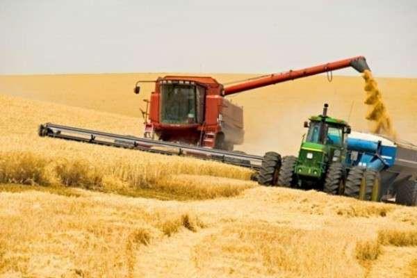 Россия собрала на треть больше зерна, чем годом ранее