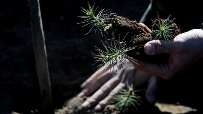 В Воронежской области лесоводы планируют посадить деревья на площади 1,7 тыс.га