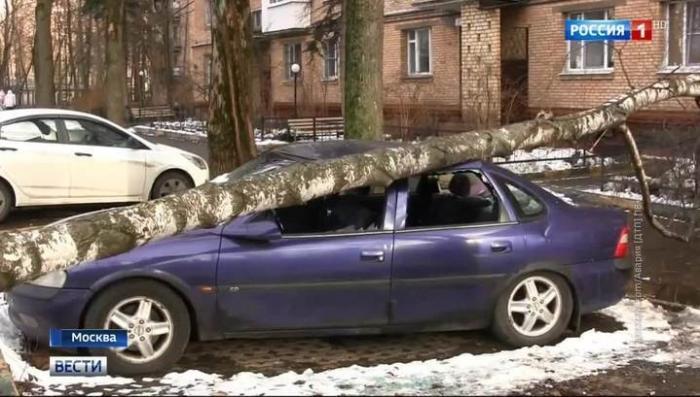 В Москве появились первые жертвы непогоды: в столице ветром валит деревья