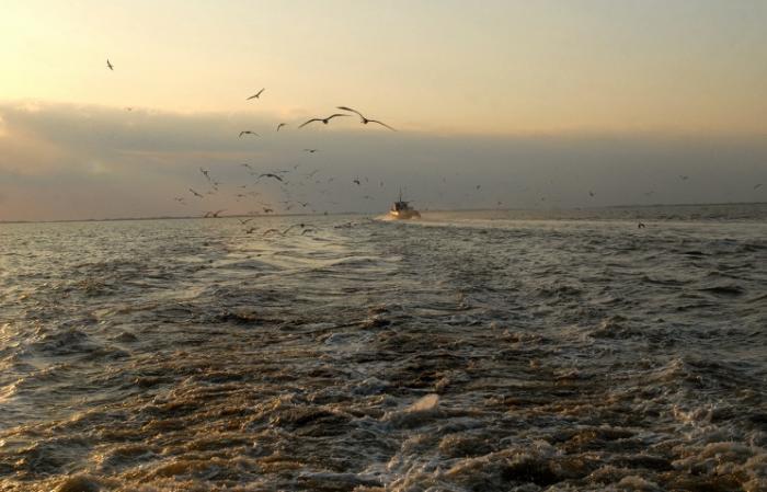 На дне Мексиканского залива образовалась «мёртвая зона» площадью около 13 тыс. кв.км