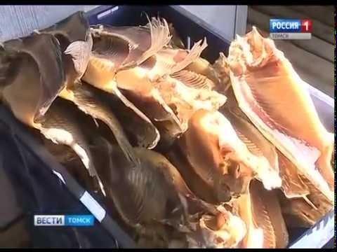 ВТомской области, благодаря госпрограмме «Бизнес-старт», рыбозавод переживает второе рождение
