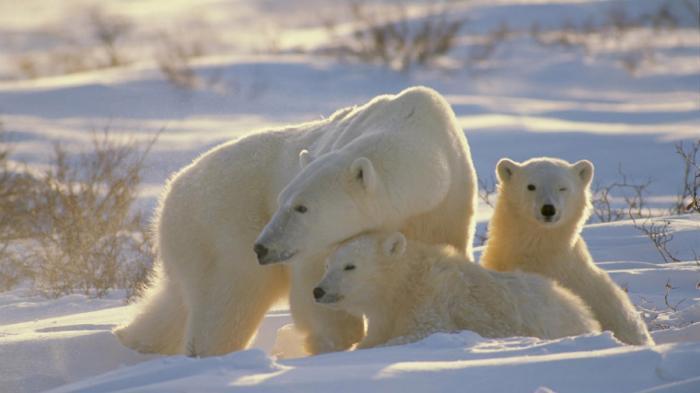 Разъяснение стратегии России в Арктике
