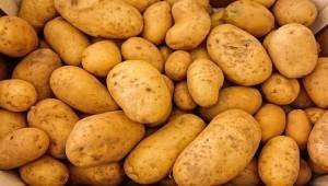 Производство семенного картофеля будут развивать на Ставрополье
