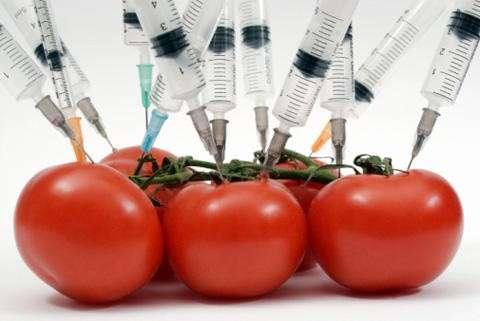 Продукцию с ГМО надо будет маркировать
