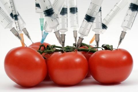 Закон об обязательной маркировке продукции с ГМО провален лоббистами Монсанто