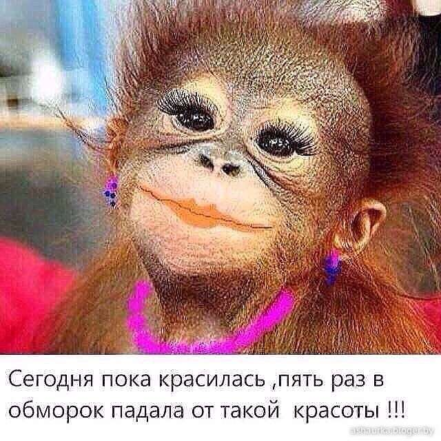 Юмор из Жизни: наши Маши Обезьяши. Или особенности русского языка