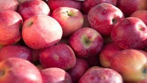 Яблочное импортозамещение: Кубань намерена занять 43% российского рынка