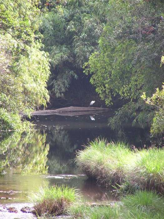 В этом заповеднике живет множество редких птиц и животных.