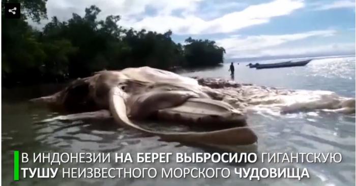 В Индонезии выбросило на берег гигантскую тушу неизвестного морского существа