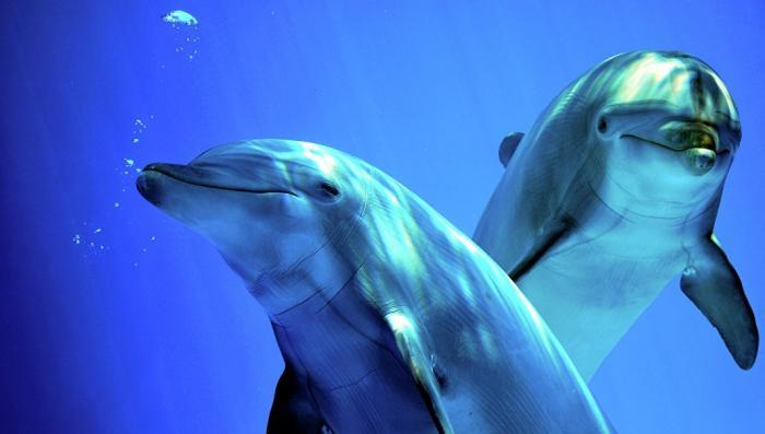 В Одессе на берег выбросило десятки мертвых дельфинов